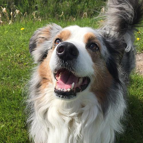 Minou Cornils, Vier Pfoten Tierheilpraxis für Hunde und Katzen