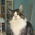Tierheilpraxis Katzen